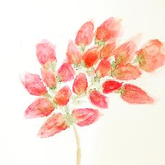شجرة مزهرة