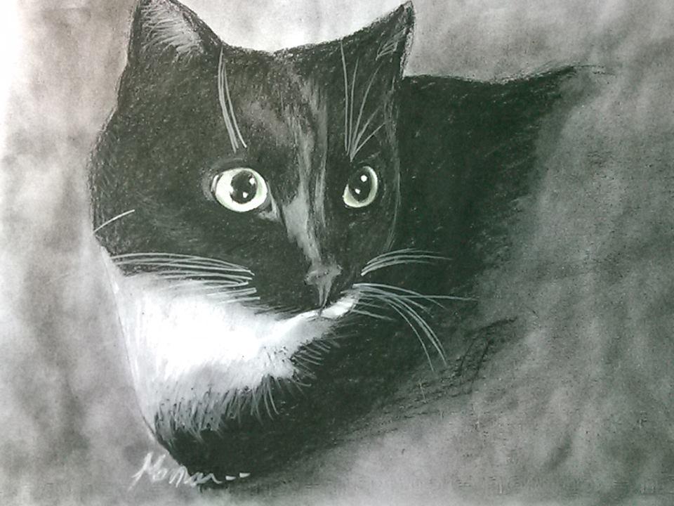 قطه سوداء ذات العيون الخضراء