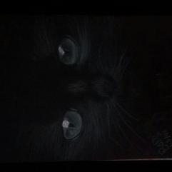 القطه السوداء