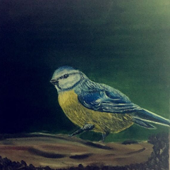 طائر القرقف الازرق