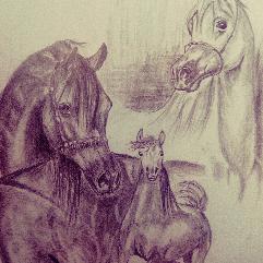 خيال حصان