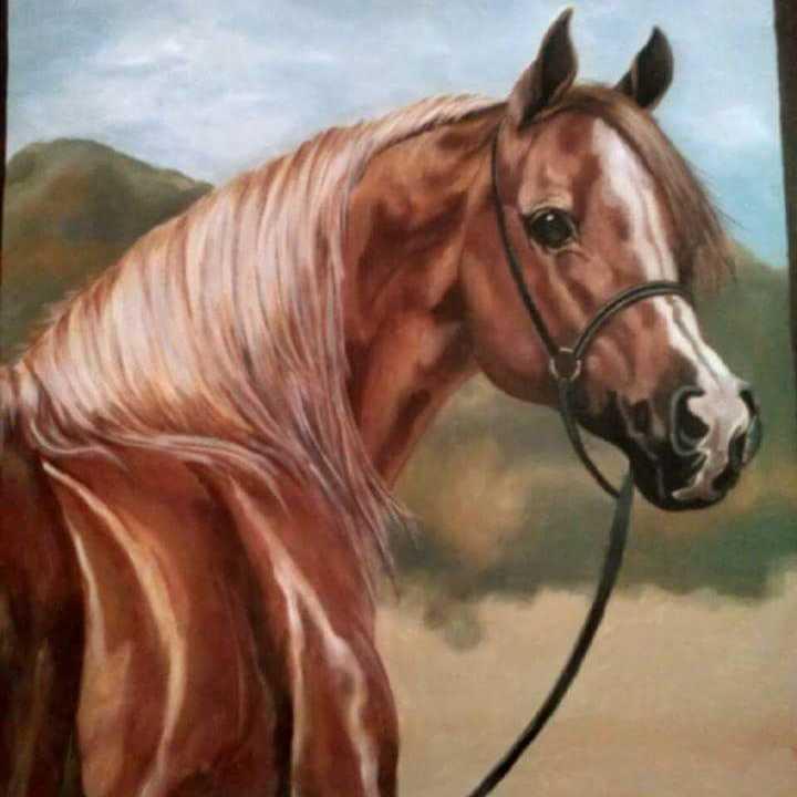 حصاني ٢