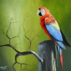 Calm Parrot