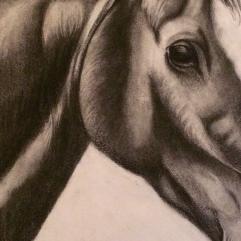 سحر الحصان