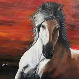 Beauty Of Arabian Horses