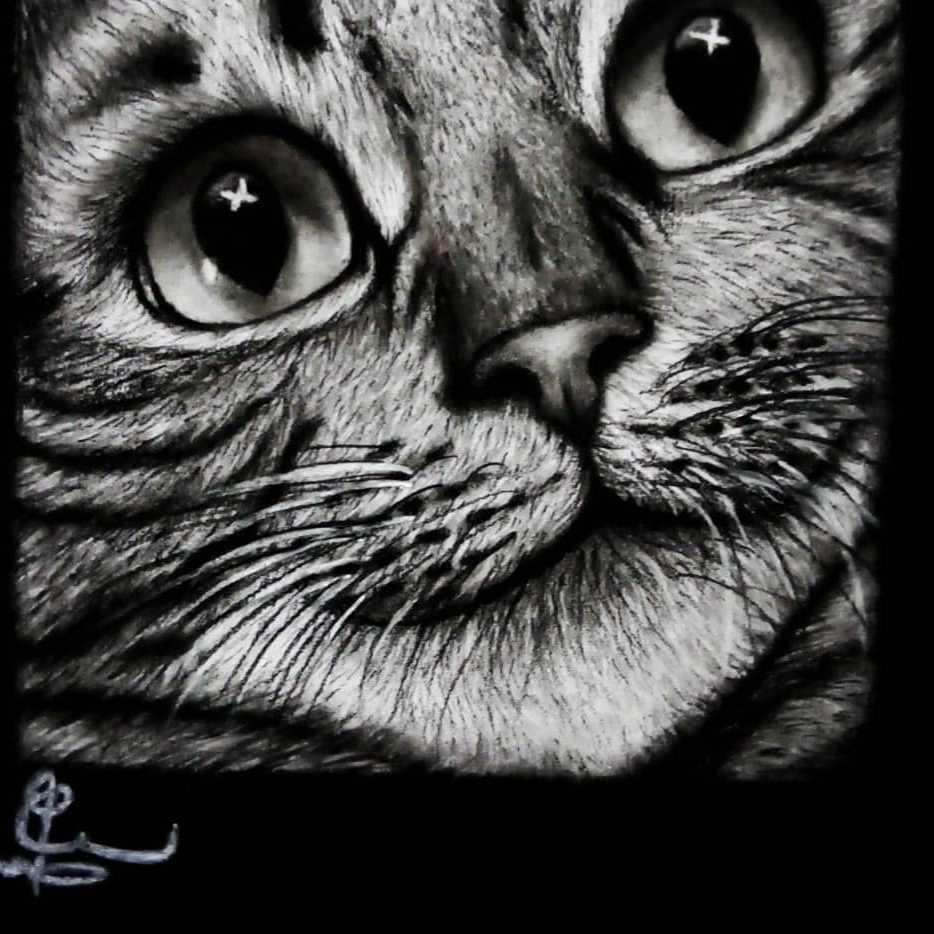 نظرات القط 😻