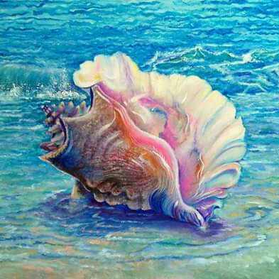 صدفة في البحر