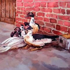 عشة البط