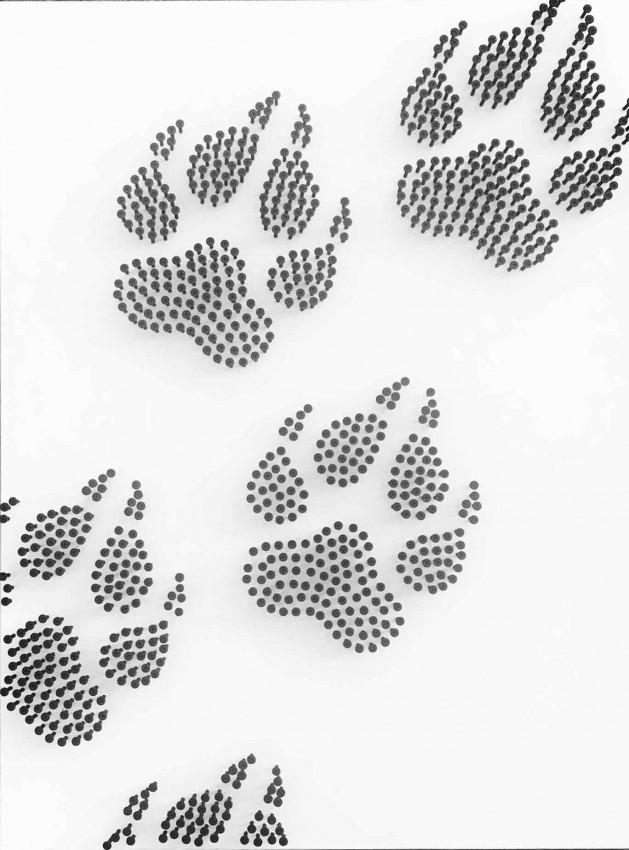(قدم الدب  (فن المسامير