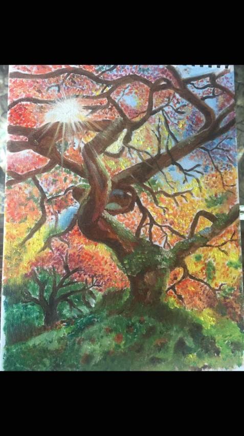 أشعة الشمس  عبر الشجرة