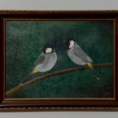 طيور البلابل